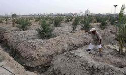العراق يعتمد استراتيجية زراعية مدعومة بحظر استيراد محاصيل مختلفة