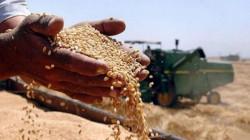 المثنى تحقق رقماً قياسياً بتسويق الحنطة بلغ 90 ألف طن
