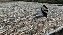 """نفوق جماعي للأسماك جنوبي العراق بفعل """"أجندات خبيثة"""""""