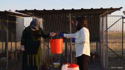 نازحات عراقيات يبتكرن مشاريع مدرة للغذاء والدخل