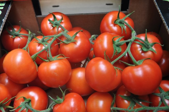 البصرة تبدي استعدادها لزراعة الطماطم لكن بشروط