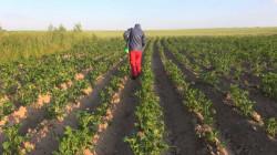 صلاح الدين تُحمّل 3 وزارات عرقلة الخطط الزراعية وتحذر من كوارث معيشية
