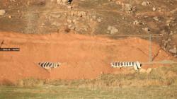 بالصور.. تركيا تستأنف بناء الجدار العازل بالقرب من القرى السورية المحاذية لنهر دجلة