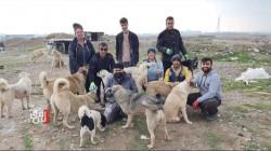 أربيل.. متطوعون يبنون ملاجئ للكلاب الشاردة في أربيل (صور)