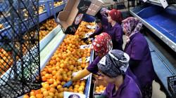 العراق ضمن البلدان الخمسة الأكثر استيرادا للخضر والفواكه من تركيا