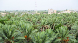 Baghdad's governor reveals a plan to create a green belt around the capital