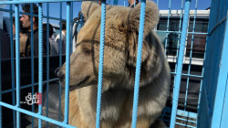 AKA releases six bears to the wild in Duhok