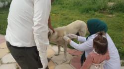 """ديالى تطلق حملة بيطرية للتحصين من """"داء الكلب"""""""