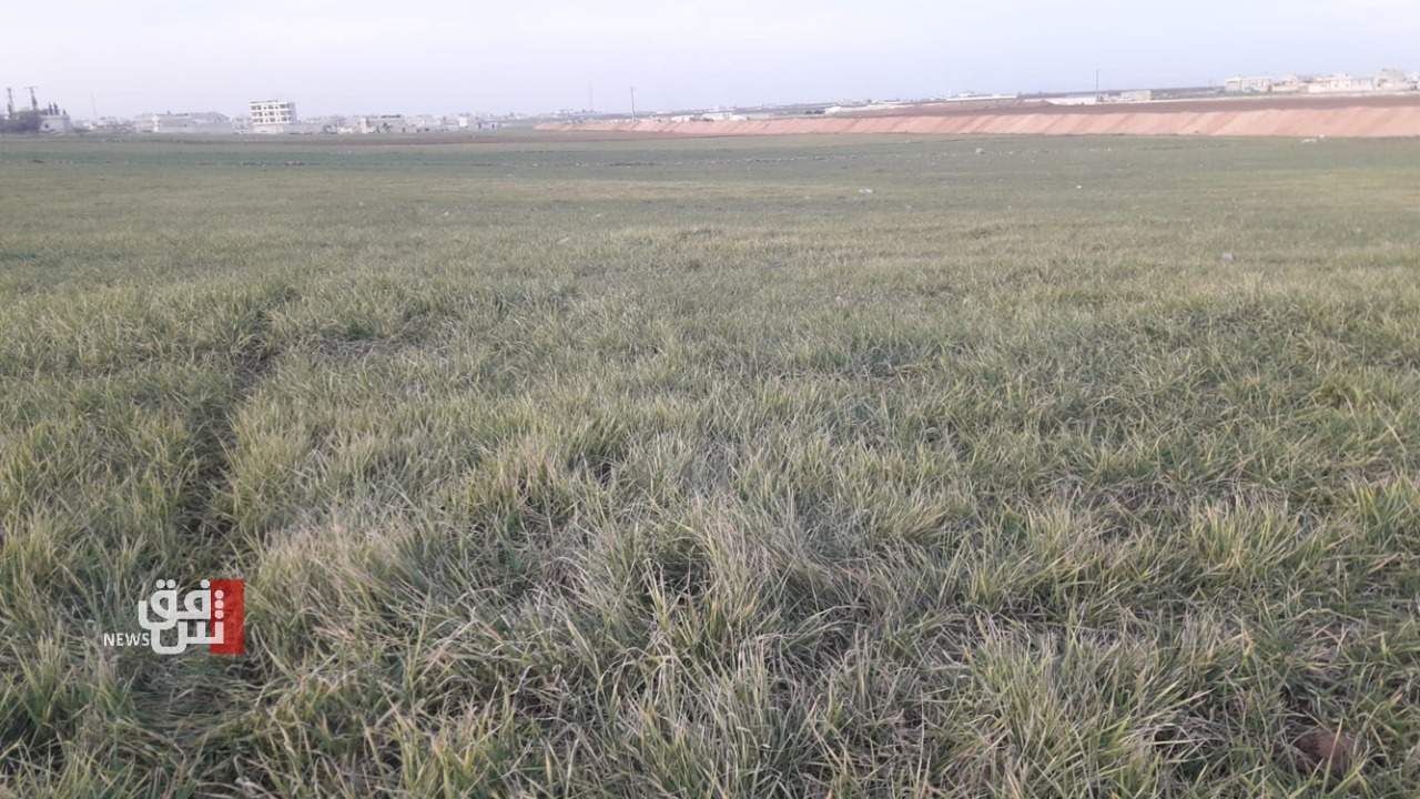 Lack of rain and government support plunged Saladin wheat season to unprecedented low