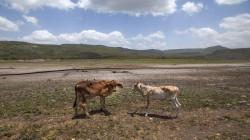 الجفاف يضرب ايلام الفيلية ويلحق خسائر فادحة بمربي المواشي
