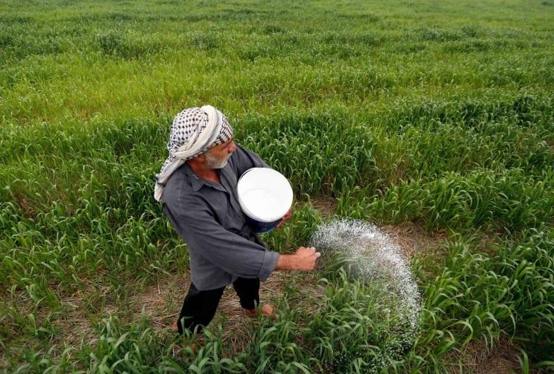التخطيط تعلن ارتفاع إنتاج العراق من المحاصيل الزراعية والمنتجات الحيوانية
