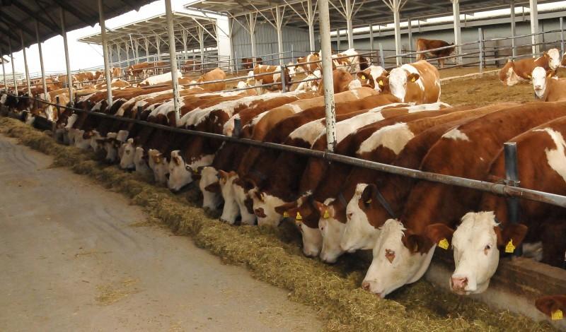 العراق يتبوأ المرتبة الأولى في إستيراد المنتجات الحيوانية من تركيا