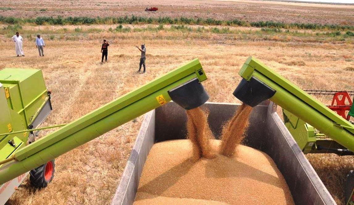 صلاح الدين تتوقع إنتاج نحو 600 ألف طن من الحنطة وتطالب بزيادة مراكز التسويق