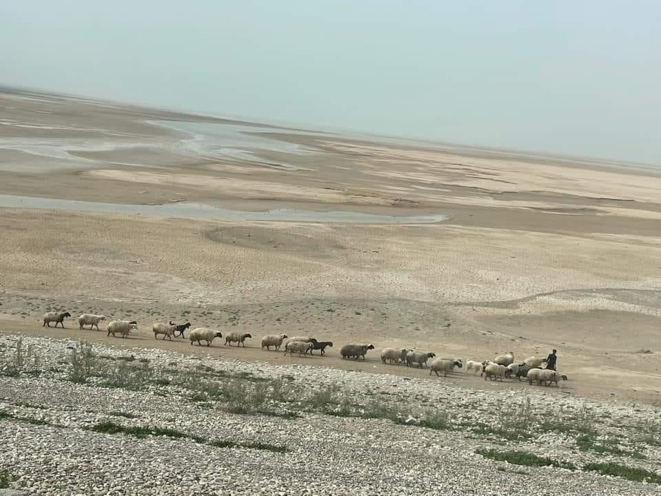 "MP of Diyala warns of an ""unprecedented"" drought"