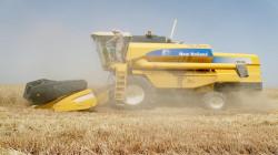 """مزارعون عراقيون يشكون """"تصنيف"""" الحنطة ويلجأون للتسويق الخاص"""