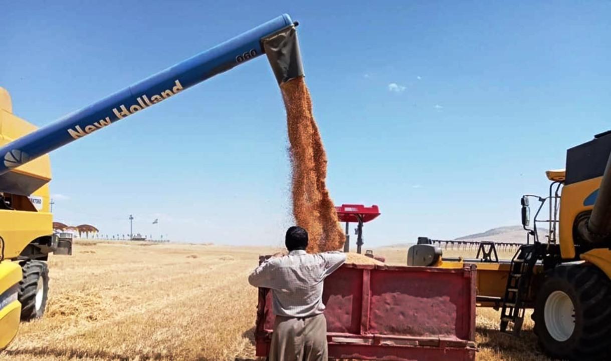 زراعة كوردستان تنجز أكثر من 50% من حملة الحصاد في خانقين دون حوادث تخريبية