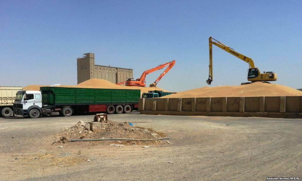 الجفاف يخفض انتاج القمح في كرميان لأكثر من 70%