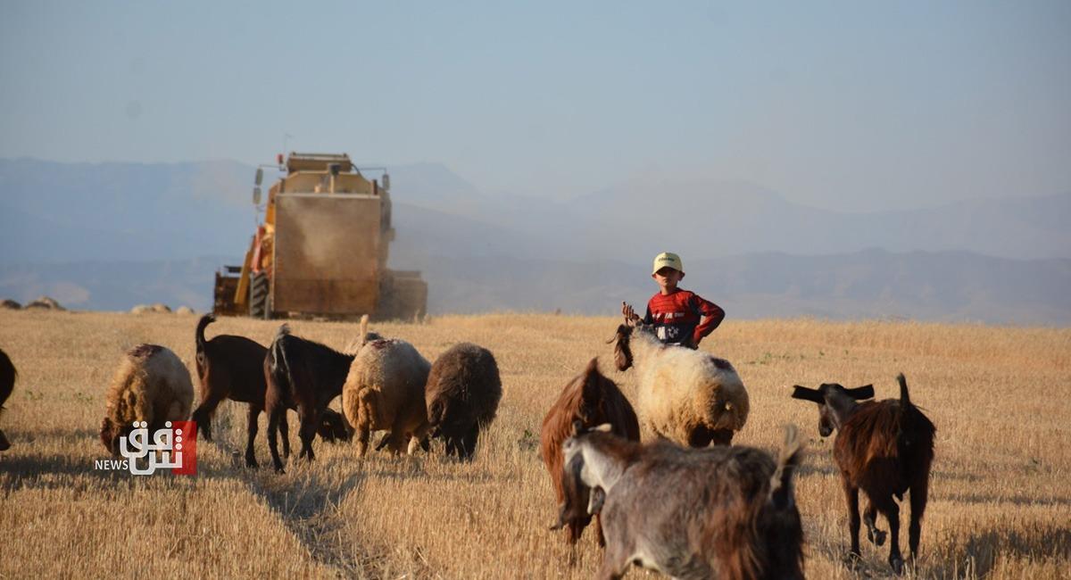 صور.. شح المياه يكبد مزارعي ديرك خسائر بالإنتاج