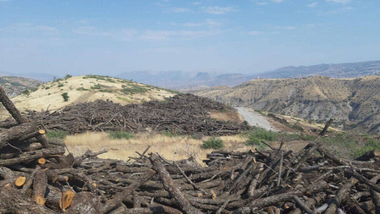 منظمات بيئية تتحرك لتدويل قضية قطع الأشجار من قبل تركيا في إقليم كوردستان