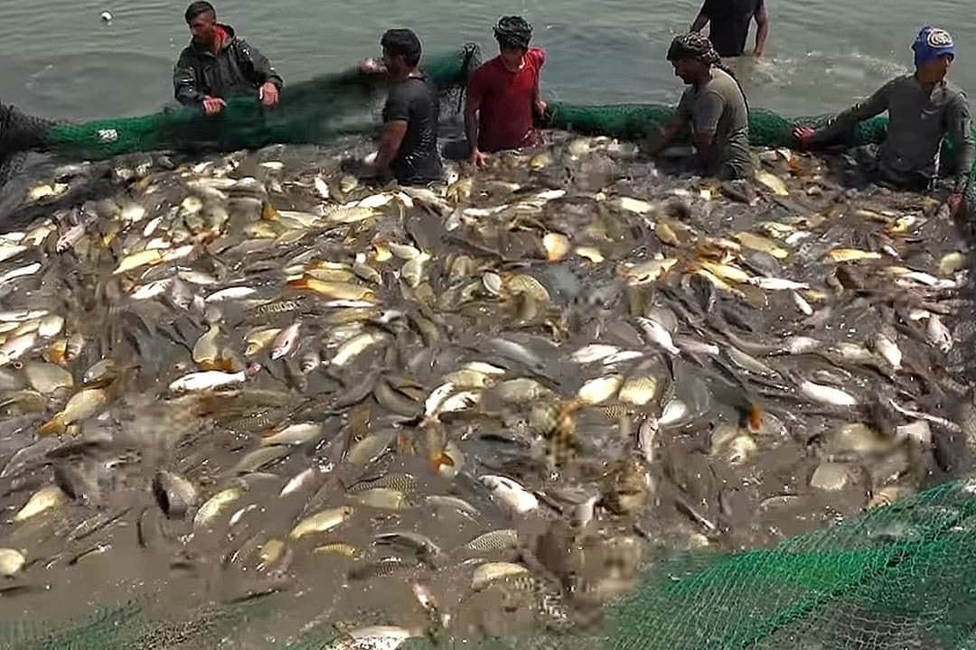 الجفاف وشح الموارد يهددان بفقدان 75% من ثروة ديالى السمكية
