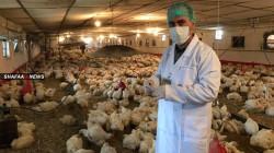 """وزير الزراعة يعلن السيطرة على """"بؤرة"""" انفلونزا الطيور في البصرة"""