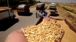 Employee caught red-handed tampering with wheat examination results in Najaf
