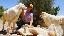 إقليم كوردستان .. زوجان يعالجان القطط والكلاب منذ 13 عاماً (صور)