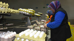 Egg prices' upsurge: Mutual accusations and calls to resume importing