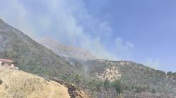 """صور .. حريق يلتهم عشرات الدوانم من سفوح جبل """"سفين"""" في شقلاوة"""