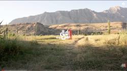 فيديو.. أرض في إقليم كوردستان من يزرعها يصاب بالجنون وتموت زوجته