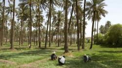 لجنة نيابية تبشر المزارعين بشأن مستحقاتهم المالية المتأخرة