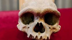 """سلالة جديدة.. الكشف عن جمجمة """"الرجل التنين"""" في الصين"""