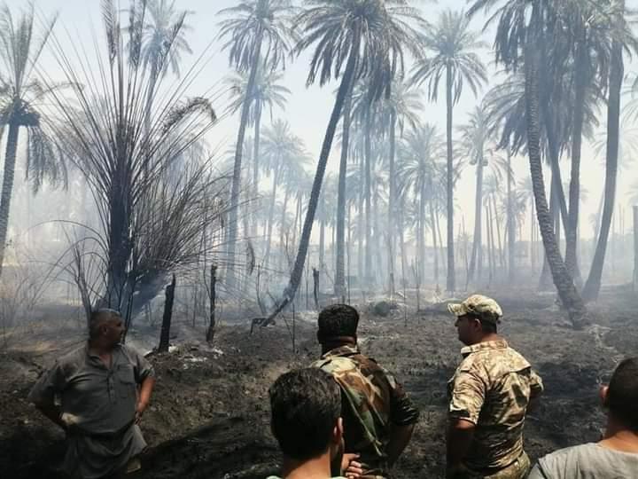 ألسنة النار تلتهم ٦ دوانم من بساتين ديالى (صور)
