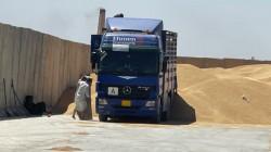 صلاح الدين تحل بالمرتبة الثانية في إنتاج الحنطة
