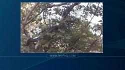 صور .. ظهور ثعبان عملاق شمال أربيل