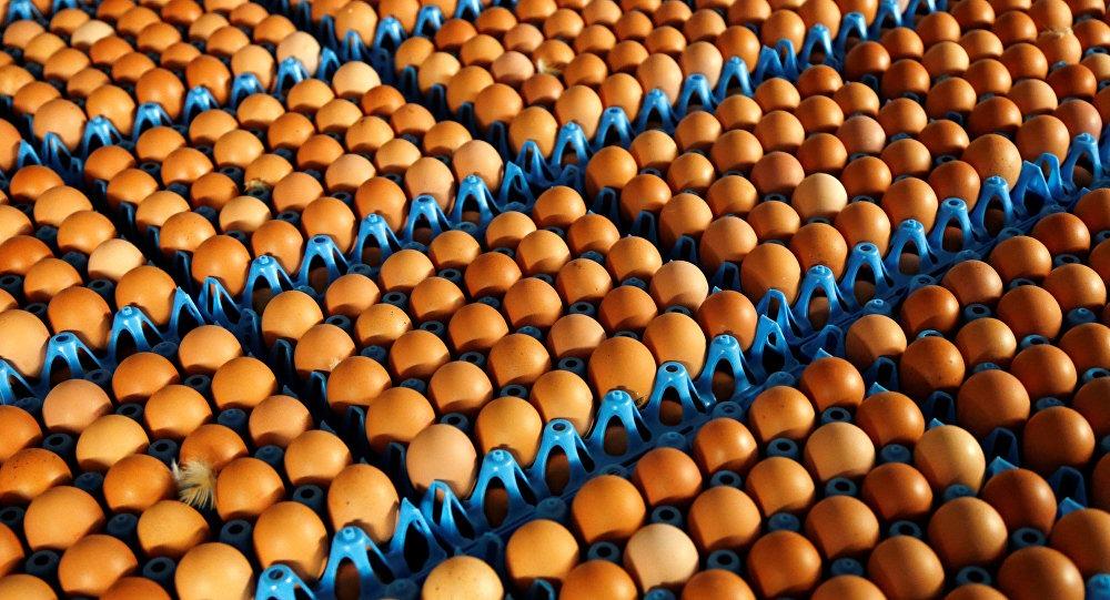 الزراعة الاتحادية تصدر توجيهاً عاجلاً بتوريد البيض والدجاج والأعلاف من كوردستان