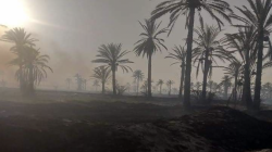 Fire destroys more than 50 dunums of orchards in Diyala