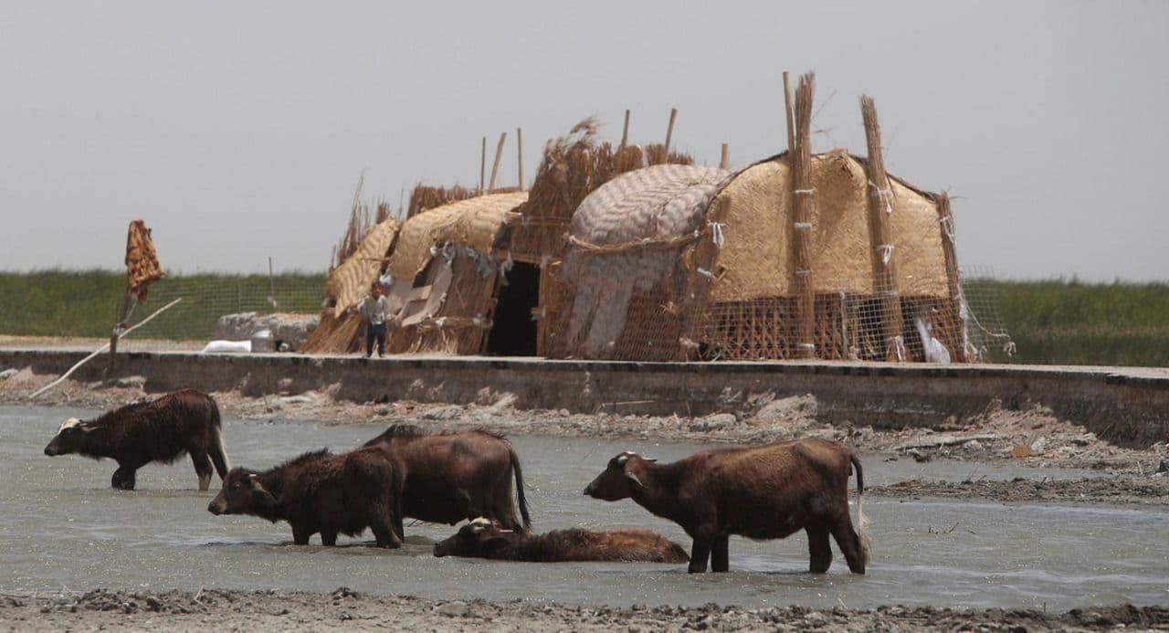 ذي قار: تكبدنا خسائر كبيرة بسبب شح المياه ولا صحة لنفوق الحيوانات والأسماك