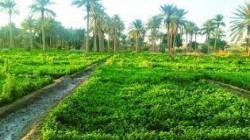 زراعة واسط تطالب الحكومة بزيادة الحصة المائية