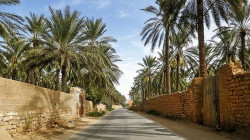 Basra dates harvest suffices Iraq this year, official says