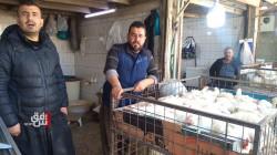 العراق يسمح باستيراد بيض التفقيس وانتقال الحيوانات الحية المحلية بين محافظاته