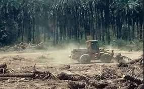 لجنة نيابية تؤشر تقطيع وبيع أكثر من نصف الأراضي الزراعية في العراق