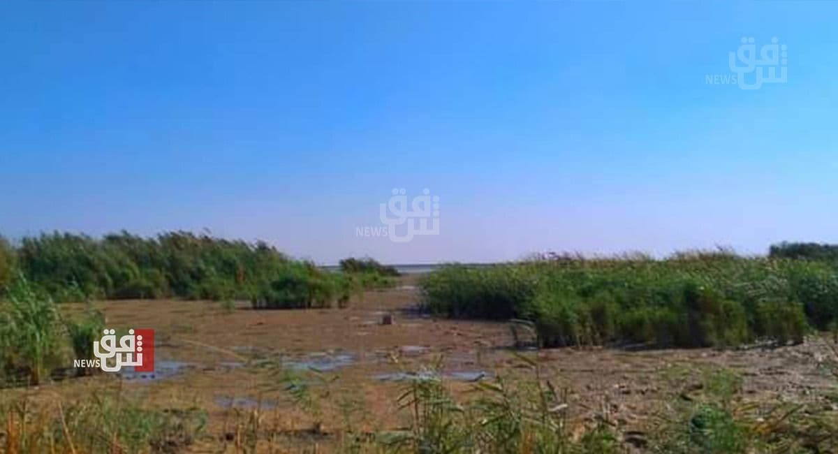 Drought causes a massive displacement in the marshlands of Maysan