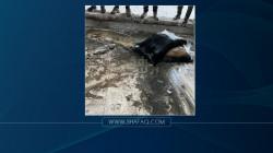 العثور على أكياس تضم مبالغ مالية كبيرة تحت انقاض مبنى حكومي في الموصل