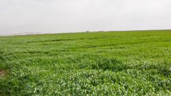 زراعة كوردستان في خانقين:  نصف المزارعين لم يتسلموا مستحقات تسويق الحبوب
