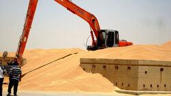 بعد أكثر من عامين.. الزراعة تطلق المستحقات المالية لمسوقي القمح والشعير