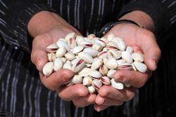 العراق يتصدر لائحة البلدان المستوردة للمنتجات الزراعية من إيران