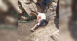 القوات الايرانية تستهدف راعيا وقطيعه بثالث حادث خلال اسبوع في اقليم كوردستان