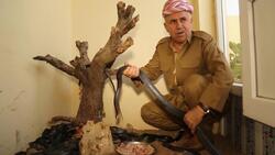 منذ اكثر من 3 عقود .. رجل من اقليم كوردستان يحول منزله موطنا لعشرات الأفاعي