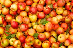 بيروت تتفاوض مع بغداد لتصدير التفاح اللبناني الى العراق